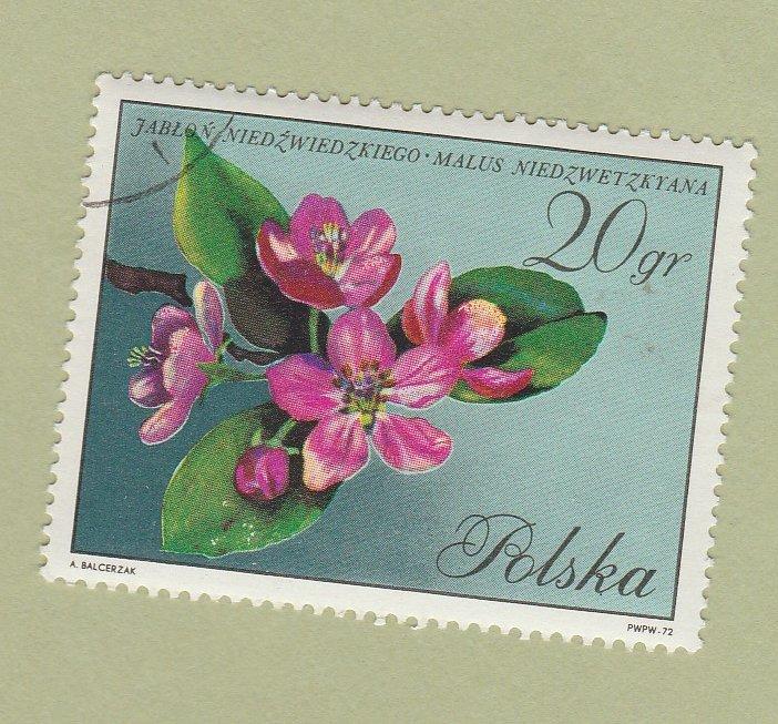 Poland Polska Stamp Used Floral 20 gr Crabapple Flowers Tree Blossoms