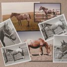 Appaloosa Horse Photos Assortment Lot os Seven Pictures
