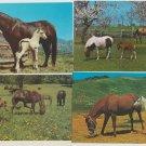 Lot of 4 MARES & FOALS Postcards Horses