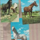 Lot of 3 HORSES Postcards Vintage Unused