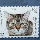Manx Cat Afghan Postage Stamp Grey Tabby Head Study Miniature Art