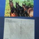 Three Arabian Horses, Postcard, Irene Hohe, Photography, Mares, Equine