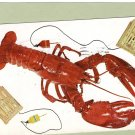 Maine Lobster, Trap, Cage, Crustacean, Vintage Postcard, Postmarked