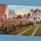 A Rose Hedge Pretty Floral Scene Postcard Vintage Flowers