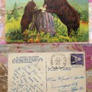 Learning Table Manners Postcard Bears, Rocky Mountain, Wildlife