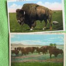 Two Postcards Bull Buffalo Bison Herd Vintage Wildlife
