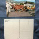 Ox Cart Italian Full Color Postcard Cattle Oxen Bullocks