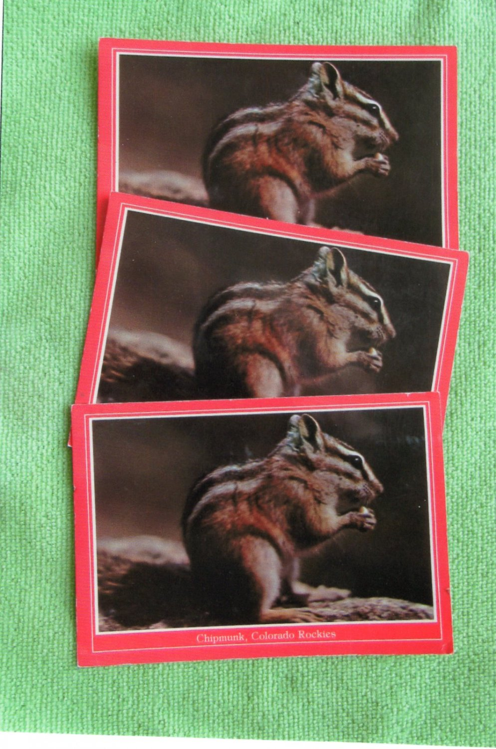 Chipmunk, Colorado Rockies, Wildlife, Rodent, Full Color Postcards, Unused