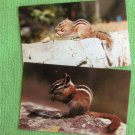 Two Chipmunks Eating Peanuts Full Color Postcards, Wildlife, Minnesota, Rodents