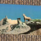 Wild Palomino Mustang Stallion Magnificent Horse Postcard, Vintage