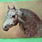 Arabian Stallion Large Postcard, Ibn Raffon+, Top Ten, Legion of Merit, Champion, Horse