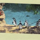 Penquins At Forest Park Zoo, St. Louis, Missouri, Vtg Linen Postcard, Birds
