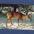 The Snow May Keep Him Hungry Postcard Buck Deer Wildlife In Winter Vtg