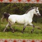 """Holstein's Nightlight"" Riding Pony / Horse Trotting Equine Postcard, Full Color"
