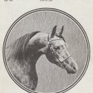 Arabian Horse News Magazine, July 1972 Vintage Issue, Horses, Riding