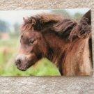 Shetland Pony Adorable Shaggy Foal Postcard By Irene Hohe, Photo, Portrait