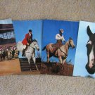 Four Jumbo Horse Postcards, Full Color, Thoroughbreds, Pinto, Jumper, Quarter Horse