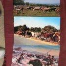Jumbo Postcards, Horses At Pasture, Buffalo Bill, Assateague Ponies, Mares, Foals