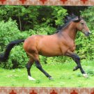 Lusitano Stallion Galloping Horse Full Color Postcard Equine, Portuguese Breed