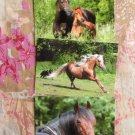Morgan Horses Glossy Postcards, Mare & Foal, Head Study, Stallions, Galloping