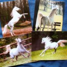 Four Arabian Horse Full - Color Postcards Stallions, Equine