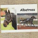 Standardbred Pacer Postcard ALBATROSS Horse Racing