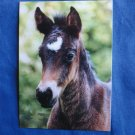 Riding Pony Foal / Horse Equine Postcard Irene Hohe German Photography