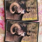 Bighorn Sheep Ram Postcards Set of Two, Rocky Mountain Wildlife, Colorado