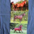 Three Horses, Irene Hohe Postcards, Riding Ponies, Horses, Mares & Foals, Stallions