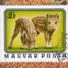 Wild Boar Postage Stamp, Magyar Posta, Hungary, Piglets, Young Animals