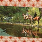 Horseback Riders In Forest Solitude, Vintage Postcard, Full Color, Horses, Scenic