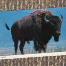 Buffalo Bull Full Color Postcard, Wildlife, Bovine, Chrome, Used