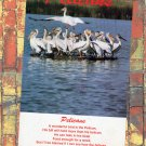 The Great White Pelican Full Color Postcard Magnificent Birds With Poem