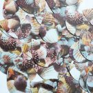 "Teardrop Sequin 1.5"" Brown Pink White Seashell Print Opaque"