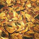 """Square Diamond Sequin 1.5"""" Gold Orange Coleus Foliage Leaf Metallic"""