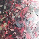 """Sequin Rectangle 1.5"""" Red Silver Bird Feathers Print Metallic"""