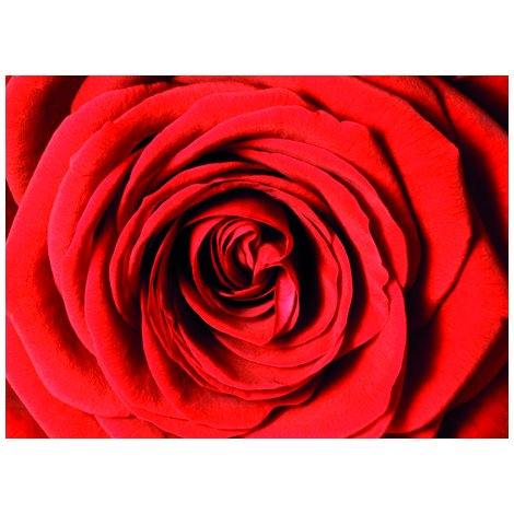 Red Rose Postcard Sent to You in the Mail Using a Pictorial GB Post and Go Stamp