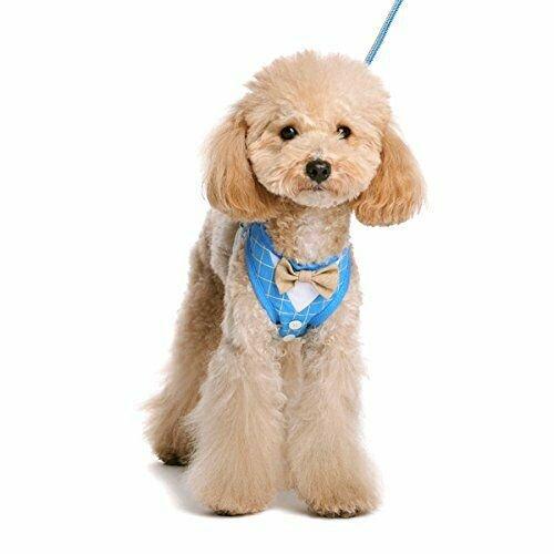 Dogo EasyGo Bowtie Harness - Blue