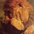Vintage 1988 Lion Why Me ? Poster (22 x 34 inches) Closeup never previously displayed