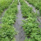 Weedmat Weed Control Matting  Woven Fabric Sun Shade Net Black 2m x 50m