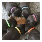Pet necklace Necklet Dog Puppies 10x200mm