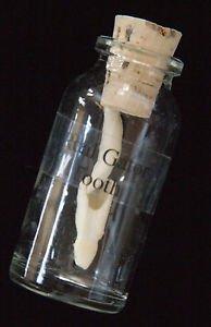 Alligator Tooth in Glass Bottle Swamp People Gator New Orleans Louisianna Cajun