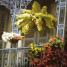Balcony Flowers New Orleans Art Print Matted Print