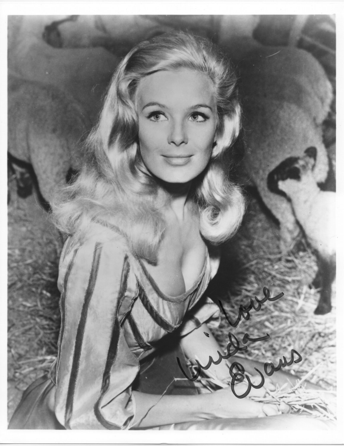 LINDA EVANS - THE BIG VALLEY TV SHOW - SO VERY SEXY - HAND SIGNED AUTOGRAPHED PHOTO WITH COA