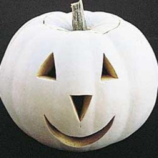SPECIAL - GHOST PUMPKIN for carving or painting WHITE Seeds Annual Rare