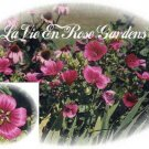 MALOPE Vulcan Dazzling Beauty SEEDS Annual