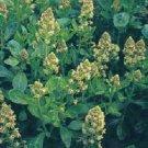 Mignonette Sweet Scented - Reseda odorata ANNUAL seeds