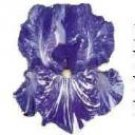 BEARDED IRIS 'BATIK' Personalized CLEAR Address Labels