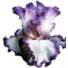 CLEAR Address Labels BEARDED IRIS 'RAIN MAN' Personalized