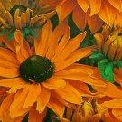 DWARF Perennial RUDBECKIA Marmalade SEEDS Stunning!